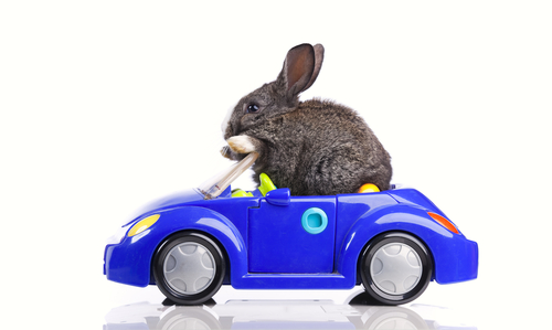 Happy Easter! | Car Care